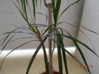 Rostliny  Gardnerseshopcz