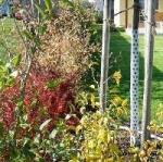 Okrasné zahrady obrázky